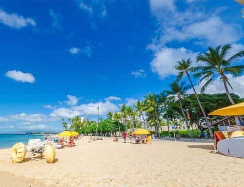 Beach Equipment Rental Business Success: Waikiki Shore Beach Services